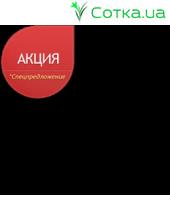 Астильба Арендса (Astilbe) (A) Lollypop®