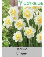 Нарцисс Unique