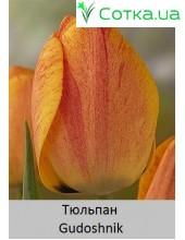 Тюльпан Gudoshnik