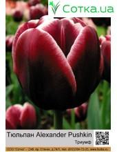 Тюльпан Alexander Pushkin