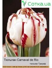 Тюльпан Carnaval de Rio