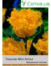Тюльпан бахромчатый    Mon Amour