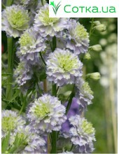 Дельфиниум (Delphinium) Highlander Crystel Delight®