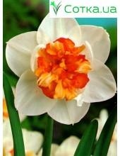 Нарцис махровый Flower Drift