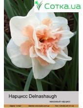 Нарцис махровый Delnashaugh