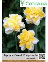 Нарцис махровый Sweet Pomponette
