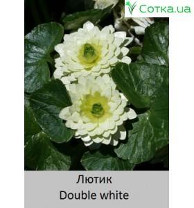 Double white