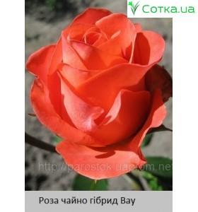 Роза Вау